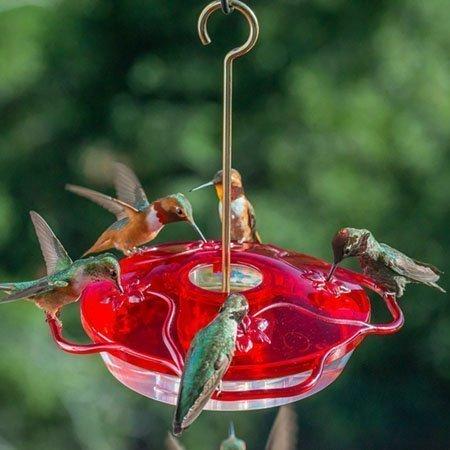 Droll Yankees Little Flyer-4 Hummingbird Feeder