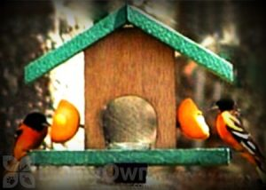 Song Birds Essential Cedar Oriole Feeder