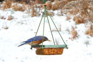 Songbird Essentials Hanging Mealworm Dish Feeder
