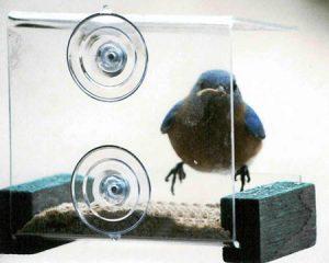 Songbird Essentials Mini Green Window Feeder